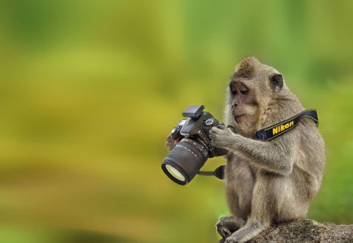 Weet hoe jouw camera werkt om het perfecte fotomoment vast te leggen