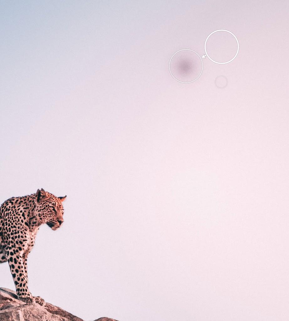 Spot removal cheetah
