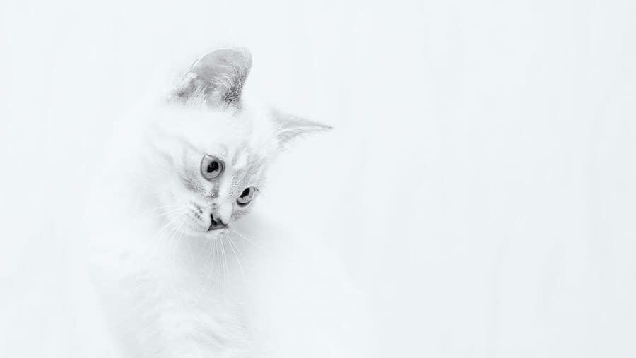 high key contrast cat